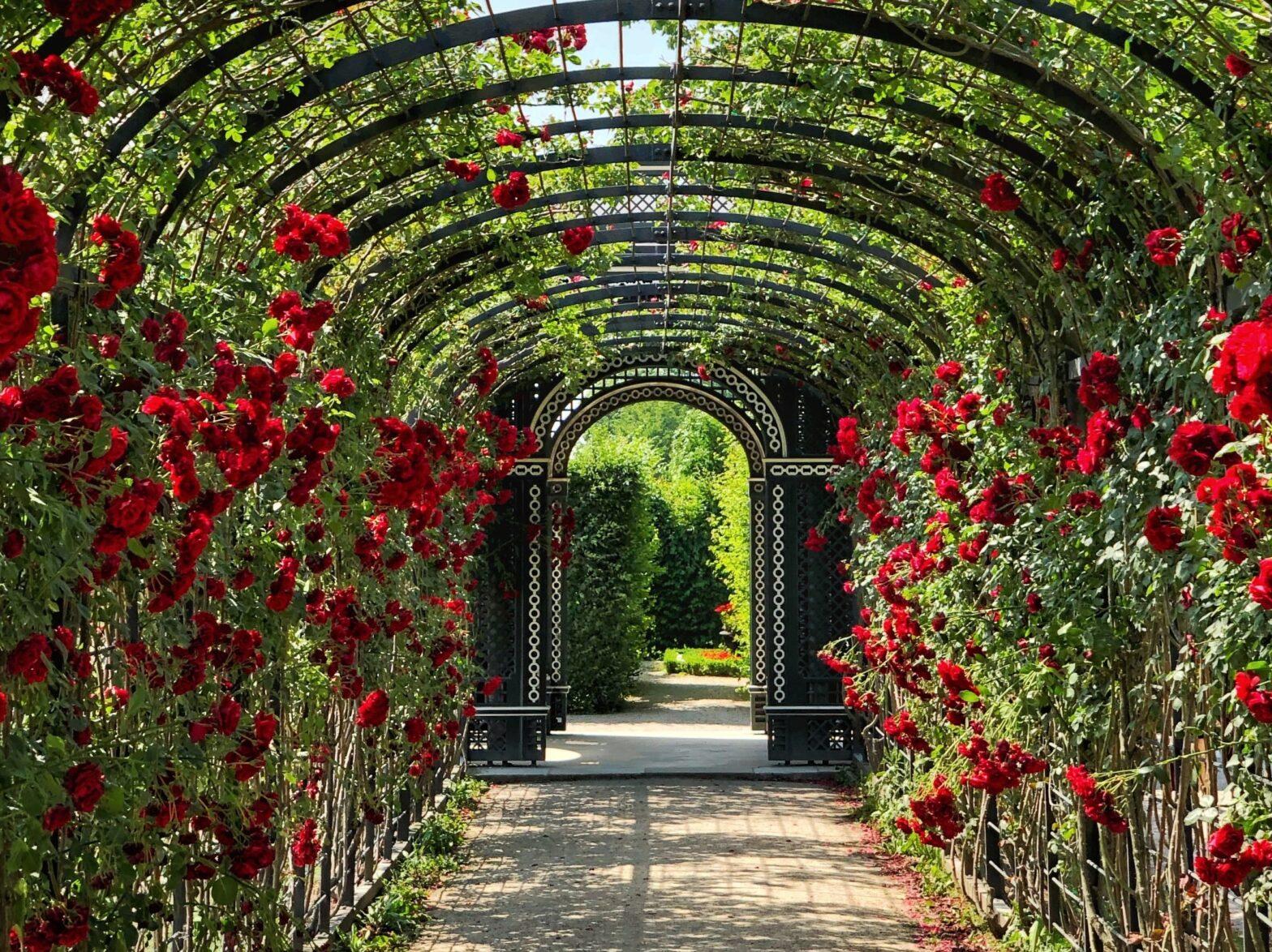 2d kerítés és kert